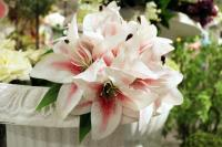 """PA10101WHRD Rubrum Lily Bqt x 9 Flowers White Red 12"""""""